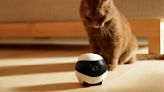 Smarter robots offer new home-security option
