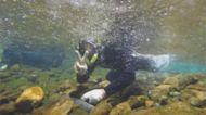 復育有成! 國寶魚櫻花勾吻鮭普查數量創新高