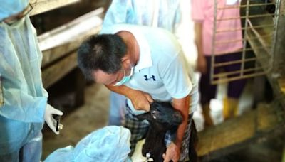 新北施打羊痘疫苗 確保動物防疫安全 | 蕃新聞
