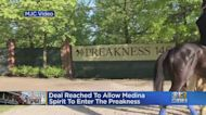 Deal Reached To Allow Medina Spirit To Enter The Preakness