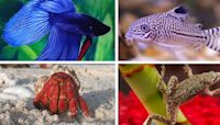 10 Small Pets for Your Fish Bowl