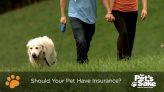 Is pet insurance recommended?
