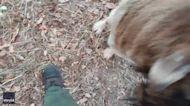 'Whoa, Weird': Affectionate Goat Makes Friends With Videographer Near Fawn Fire