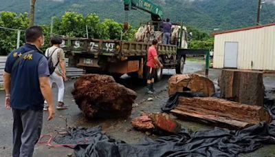 8月初颱風接連來襲 3嫌趁機檢竊3公噸牛樟漂流木遭逮