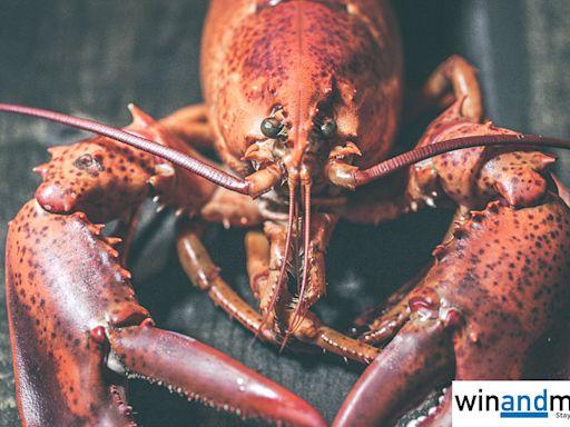 香港海關關長何佩珊稱龍蝦與國安有關 引發政治問題、澳洲主動向中國查問 - winandmac.com 視麥媒體