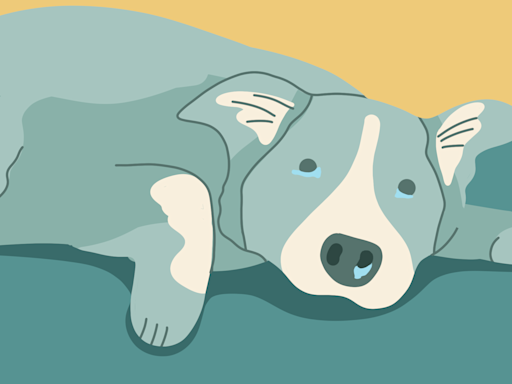 Do Dogs Get Colds?