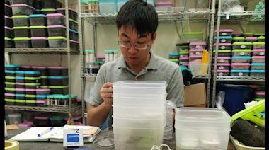 興大聯合中外研究證實白蟻耐鹽性強 乘木海漂沒問題