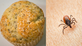 CDC Shares Disturbing Photo of Ticks Hidden on Poppy Seed Muffin — and People Are Freaking Out