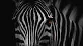The Zebra reaches $100M run rate, turns profitable as insurtech booms