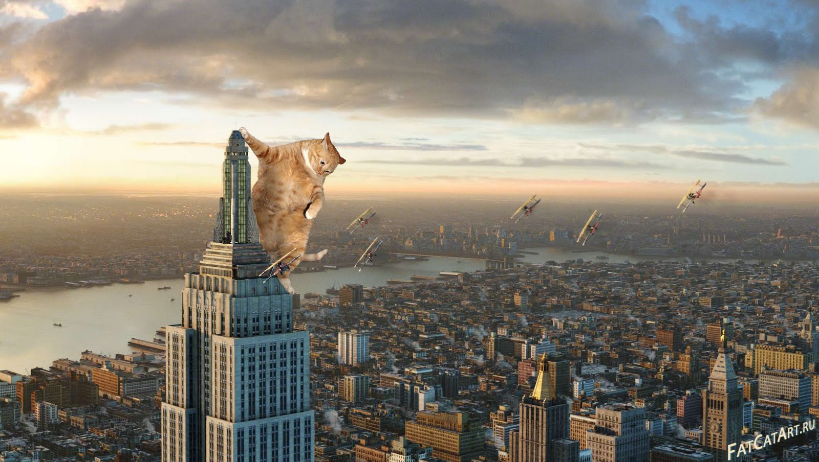 cat as king kong