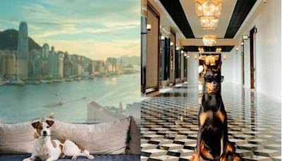 最奢華的寵物Staycation 星級酒店Rosewood Hong Kong呈獻專享寵物假期︱Esquire HK
