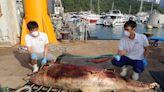 索罟群島發現中華白海豚屍 屬本年第16宗鯨豚擱淺