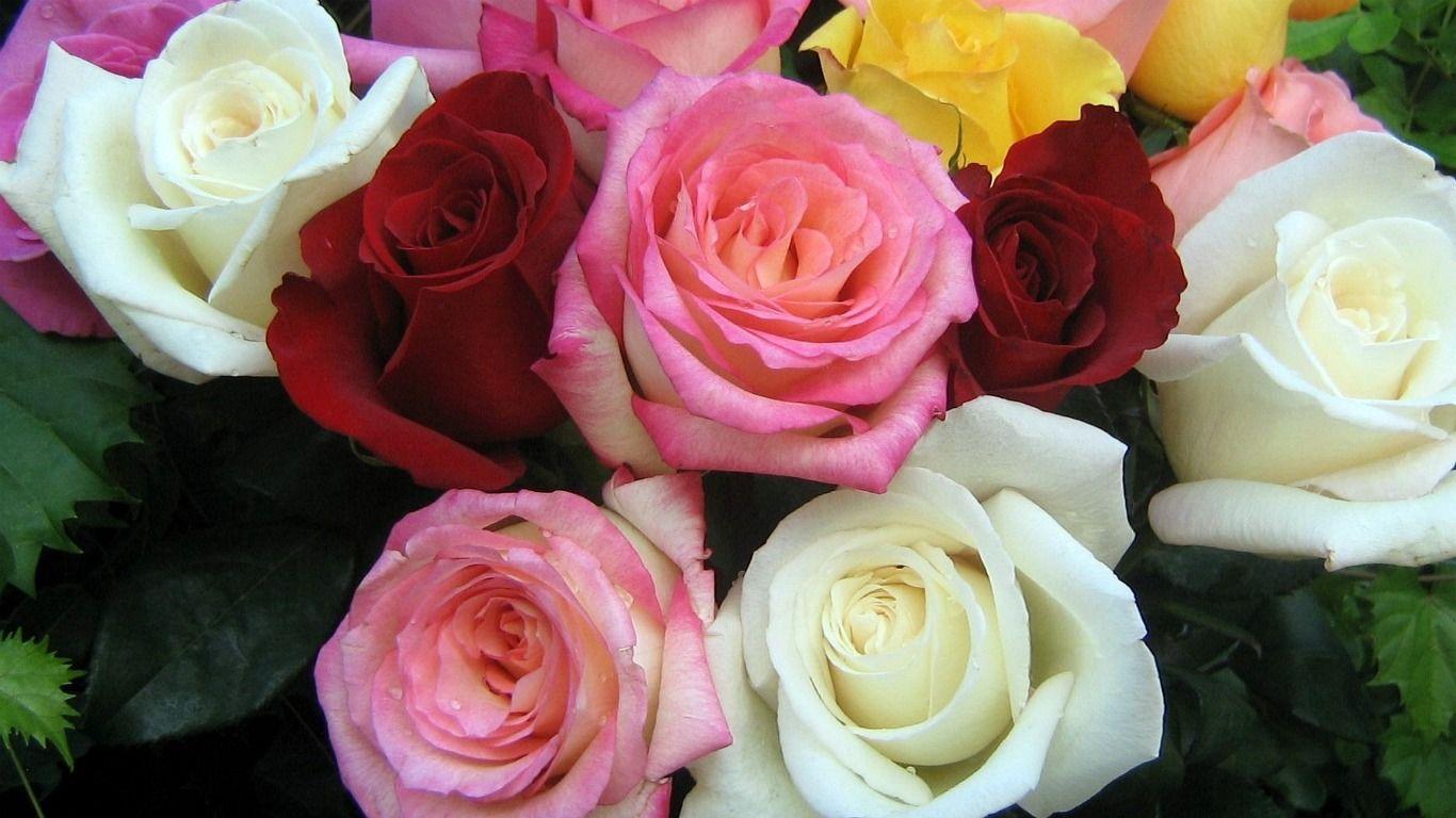 BeautyFul Flowers: good morning flowers wallpapers