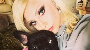 寵物保母遭槍傷兩鬥牛犬被搶走 Lady Gaga懸紅50萬美元尋犬