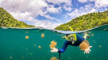 台帛旅遊泡泡有望重啟 電商推夢想包抽獎 幸運兒可獲「帛琉二日遊」