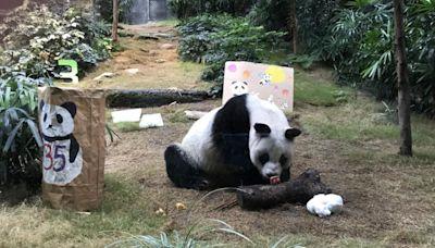 大熊貓安安嘆月餅 與市民歡度中秋