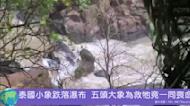 泰國小象滑落地獄崖瀑布 五頭大象為救牠竟一同喪命