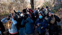 Bird-watching: The hottest new pastime in locked-down New York