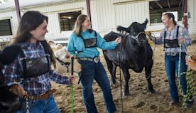 4-H agriculture programs persevere during pandemic