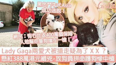 Lady Gaga兩愛犬被搶疑為了X X?懸紅388萬港元緝兇,放狗員拼命護犬慘中槍! | GirlStyle 女生日常