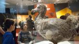 Human beings likely responsible for prompting extinction of dodo and giant tortoise, new study claims