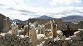 Llamas are having a moment in the US, but they've been icons in South America for millennia