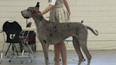 Electric City Kennel Club is hosting its Big Sky Fall Cluster