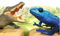 What Make Animals Cold Blooded and Warm-Blooded: Meaning and ...