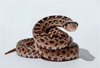 The Different Meanings and Interpretations of Snakes in ...