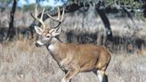 Our View: Beware the buck. And the doe. | Times Leader