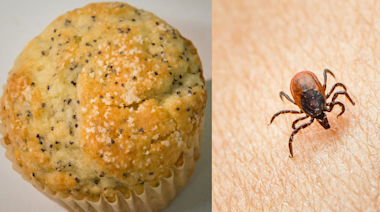 CDC Shares Disturbing Photo of Ticks Hidden on Poppy Seed Muffin—and People Are Freaking Out