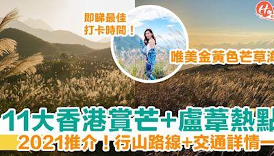 香港芒草2021|11大賞芒+盧葦熱點推介 唯美金黃色芒草海 附行山路線+交通詳情 | HolidaySmart 假期日常