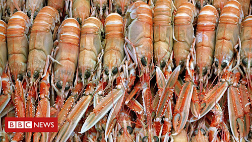 Seafood firm eyes global expansion