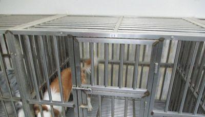 台南市生技公司欠繳勞保費73萬元 查封7隻能嗅出癌症的狗狗後立刻繳清 - Cool3c