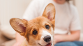 The Best Dogs for People with Anxiety