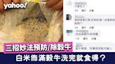 【食物安全】白米佈滿穀牛洗完就食得?三招妙法預防/除穀牛