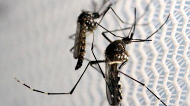 Plan to release genetically modified mosquitoes in Florida gets go-ahead