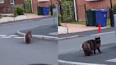 走過隨口一句「牠好胖」 貓貓竟聽到轉身怒瞪:你說什麼!?
