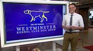 Steve Kornacki breaks down this weekend's Westminster Kennel Club Show