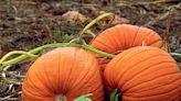 5 Amazing Health Benefits of Pumpkin