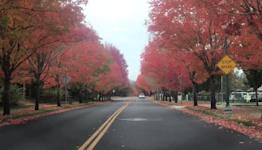 Oregon's Beautiful Fall Foliage Captured Near Portland