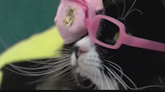 Cat Helps Kids Pick Glasses