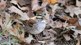 For the Birds: Tips for maintaining a bird-friendly yard and garden in the winter