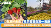 【香港好去處】元朗農莊自駕一日遊 親親草泥馬+摘$60磅士多啤梨+看花海 | 附泊車資訊