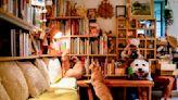香港獨立書店地圖:8間好去處與他們的鎮店之寶 端傳媒 Initium Media