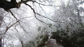 太平山急凍霧淞美景 漫步銀白童話故事
