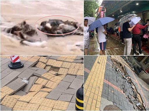 【一線採訪】鄭州路面數百處塌陷 民心恐慌