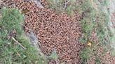 地下躲了17年 它們不忍了! 數兆神祕生物入侵美國1/3領土 科學家建議「食用」