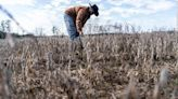 Florida judge blocks USDA debt relief payments to farmers of color
