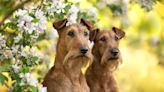 20 Dog Breeds That Won't Shed All Over Your House